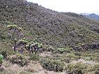 Kilimandzaro.. a hurá nahoru