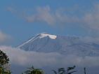 Vysokohorská květena - Kilimandzaro