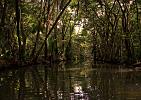 Dominica-Do pralesa po Indian River