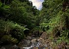 Dominica-Potok v džungli